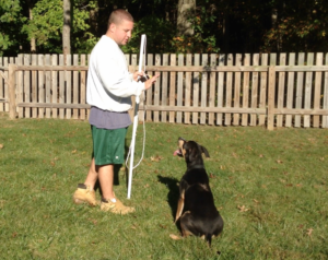 Dog Training with a professional dog trainer, even for aggressive dogs, helps you enjoy your dog to its fullest potential